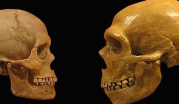 crane néandertalien