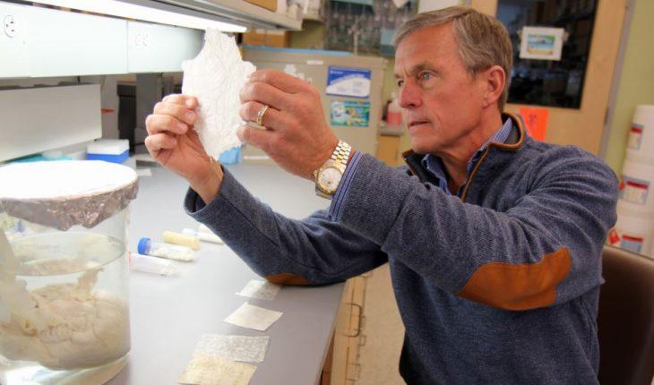 """Le Dr Stephen Badylak du centre médical de l'Université de Pittsburgh, directeur adjoint de l'Institut McGowan pour la médecine régénérative, tenant une feuille de """"matrice extracellulaire,"""" provenant de la vessie de porc."""