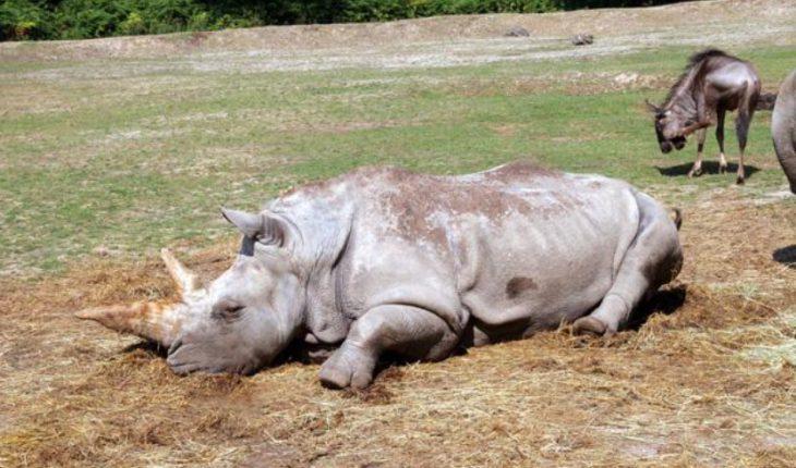 Pire qu 39 au belv d re le zoo de thoiry l 39 ouest de paris for Zoo en yvelines